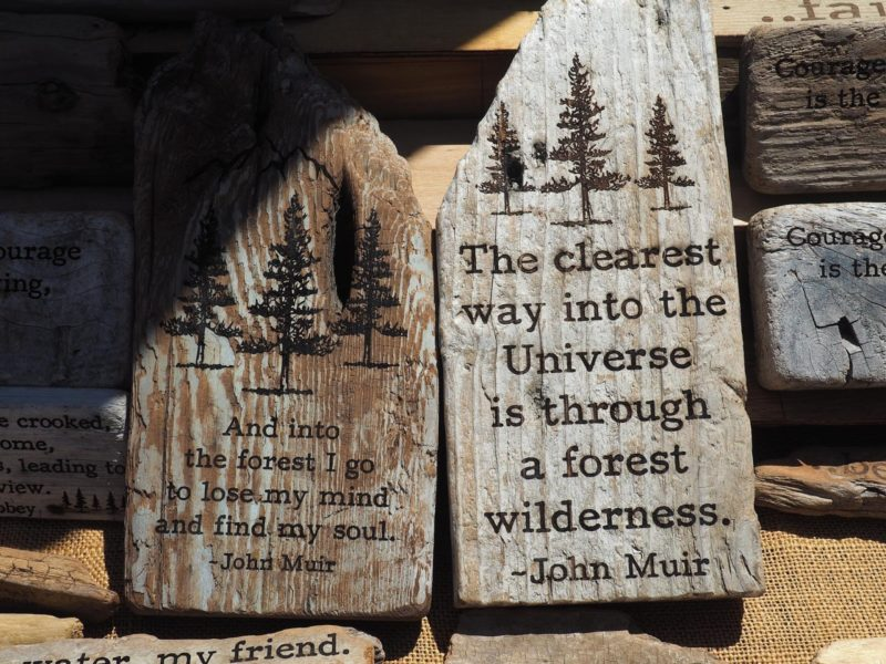 Best Nature Quotes (Refreshing & Beautiful Quotes)